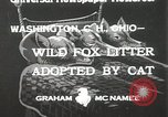 Image of litters of fox Washington Court Houes Ohio USA, 1933, second 2 stock footage video 65675023847