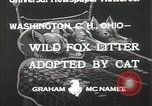 Image of litters of fox Washington Court Houes Ohio USA, 1933, second 3 stock footage video 65675023847