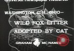 Image of litters of fox Washington Court Houes Ohio USA, 1933, second 5 stock footage video 65675023847