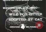 Image of litters of fox Washington Court Houes Ohio USA, 1933, second 6 stock footage video 65675023847