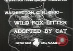 Image of litters of fox Washington Court Houes Ohio USA, 1933, second 7 stock footage video 65675023847