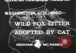 Image of litters of fox Washington Court Houes Ohio USA, 1933, second 8 stock footage video 65675023847