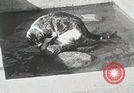 Image of Cat Izaak Walton Hollywood Los Angeles California USA, 1930, second 10 stock footage video 65675023911