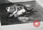 Image of Cat Izaak Walton Hollywood Los Angeles California USA, 1930, second 12 stock footage video 65675023911