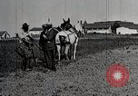 Image of Negro farmers inoculating pigs and pruning trees United States USA, 1921, second 12 stock footage video 65675023992