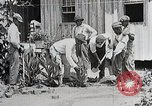 Image of Negro students learning to sow plants and build a shed Alabama United States USA, 1921, second 10 stock footage video 65675023995