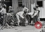 Image of Negro students learning to sow plants and build a shed Alabama United States USA, 1921, second 11 stock footage video 65675023995