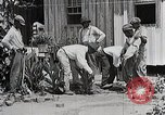 Image of Negro students learning to sow plants and build a shed Alabama United States USA, 1921, second 12 stock footage video 65675023995