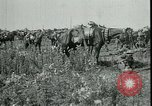 Image of Battle of Arras France, 1917, second 7 stock footage video 65675024073