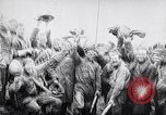 Image of Armistice ending World War 1 France, 1918, second 12 stock footage video 65675024134