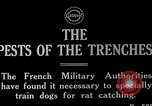 Image of Dog Training France, 1917, second 1 stock footage video 65675024165