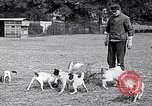 Image of Dog Training France, 1917, second 4 stock footage video 65675024165