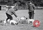 Image of Dog Training France, 1917, second 5 stock footage video 65675024165
