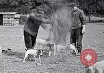 Image of Dog Training France, 1917, second 6 stock footage video 65675024165