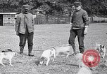 Image of Dog Training France, 1917, second 8 stock footage video 65675024165
