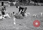 Image of Dog Training France, 1917, second 9 stock footage video 65675024165