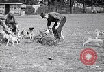 Image of Dog Training France, 1917, second 10 stock footage video 65675024165