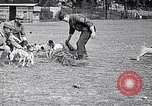 Image of Dog Training France, 1917, second 11 stock footage video 65675024165