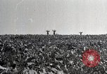 Image of German soldiers surrendering as U.S. Army advances through Belgium France, 1944, second 4 stock footage video 65675024438