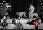 Image of Debutante Dogs Boston Massachusetts USA, 1939, second 11 stock footage video 65675024549
