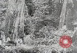 Image of Three zones of forests in Japan Japan, 1938, second 11 stock footage video 65675025095