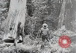 Image of Three zones of forests in Japan Japan, 1938, second 12 stock footage video 65675025095