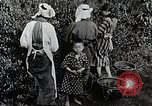 Image of Japanese women pick tea leaves Japan, 1934, second 11 stock footage video 65675025108