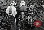 Image of Japanese women pick tea leaves Japan, 1934, second 12 stock footage video 65675025108