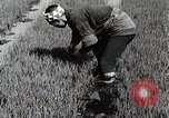 Image of Rice Farmer Japan, 1934, second 8 stock footage video 65675025110