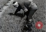 Image of Rice Farmer Japan, 1934, second 9 stock footage video 65675025110