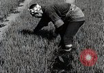 Image of Rice Farmer Japan, 1934, second 10 stock footage video 65675025110