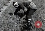 Image of Rice Farmer Japan, 1934, second 11 stock footage video 65675025110