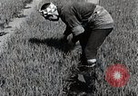 Image of Rice Farmer Japan, 1934, second 12 stock footage video 65675025110