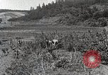 Image of Silkworm Cultivation in Japan Japan, 1934, second 9 stock footage video 65675025111