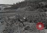 Image of Silkworm Cultivation in Japan Japan, 1934, second 10 stock footage video 65675025111