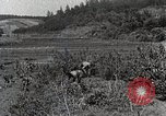 Image of Silkworm Cultivation in Japan Japan, 1934, second 11 stock footage video 65675025111