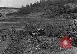 Image of Silkworm Cultivation in Japan Japan, 1934, second 12 stock footage video 65675025111
