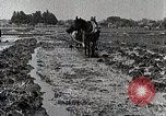 Image of Rice Field Leveling Japan, 1934, second 12 stock footage video 65675025113