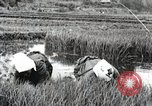 Image of Transplanting Rice Seedlings Japan, 1934, second 6 stock footage video 65675025116