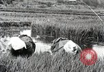 Image of Transplanting Rice Seedlings Japan, 1934, second 7 stock footage video 65675025116