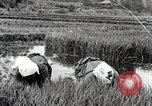 Image of Transplanting Rice Seedlings Japan, 1934, second 8 stock footage video 65675025116