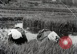Image of Transplanting Rice Seedlings Japan, 1934, second 10 stock footage video 65675025116
