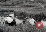 Image of Transplanting Rice Seedlings Japan, 1934, second 11 stock footage video 65675025116