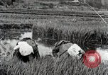 Image of Transplanting Rice Seedlings Japan, 1934, second 12 stock footage video 65675025116