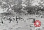 Image of American farmers United States USA, 1924, second 5 stock footage video 65675025387