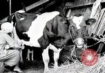 Image of American woman milks United States USA, 1915, second 2 stock footage video 65675025389