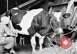 Image of American woman milks United States USA, 1915, second 3 stock footage video 65675025389