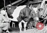 Image of American woman milks United States USA, 1915, second 5 stock footage video 65675025389