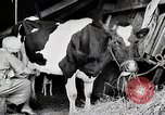 Image of American woman milks United States USA, 1915, second 6 stock footage video 65675025389