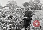 Image of Luther Burbank with cactus United States USA, 1919, second 4 stock footage video 65675025419